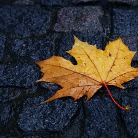 single_wet_leaf_in_autumn_193224